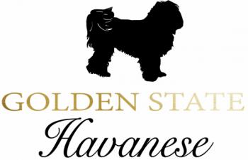 Golden State Havanese